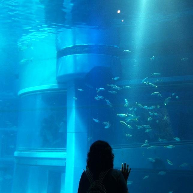 Osaka Aquarium Kaiyukan ; MetDestiny